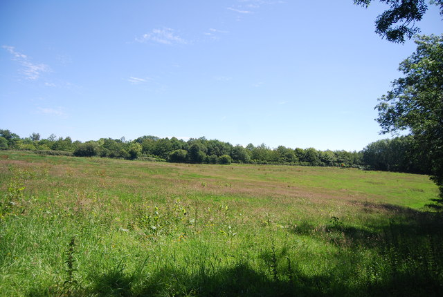 Chalk grassland
