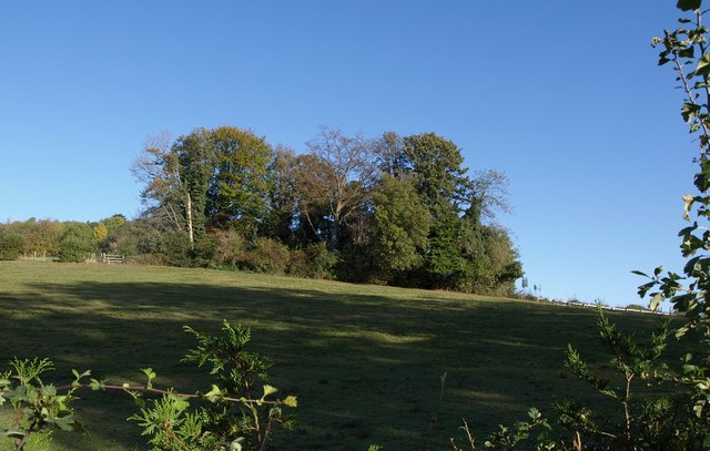 Clump of trees below Nut Wood
