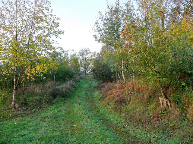 Darkham Wood
