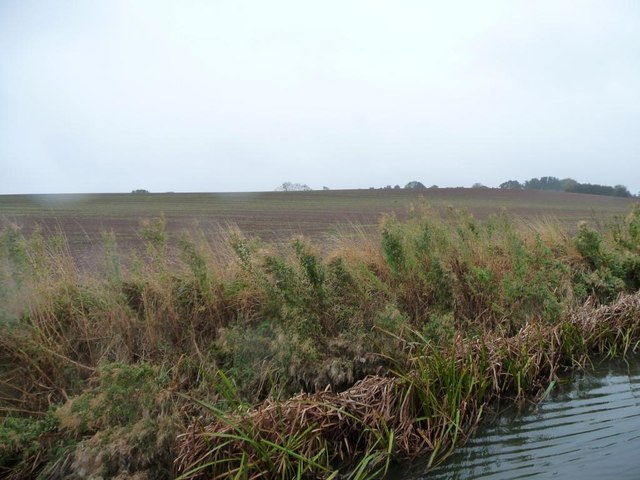 Greening field beyond reedy canal bank