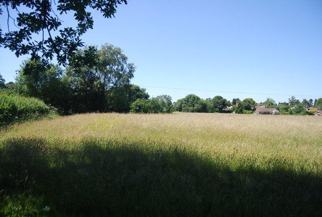Grassland, Knockholt Pound