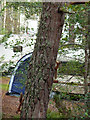 NH9110 : Red squirrels at the Rothiemurchus campsite, Coylumbridge by Phil Champion