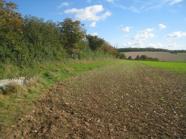 Path towards Berrydown