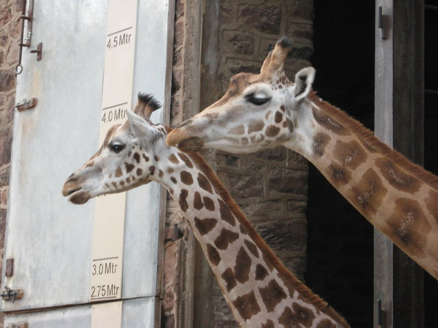 Giraffe House at Chester Zoo