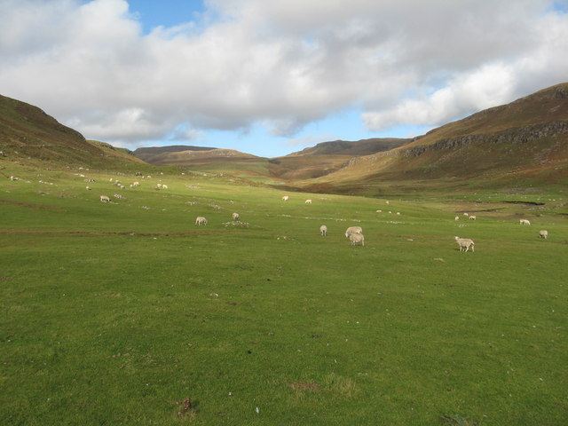 Sheep grazing in Lorgill valley