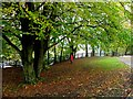 H4572 : Autumn scene, McCauley Park, Omagh by Kenneth  Allen