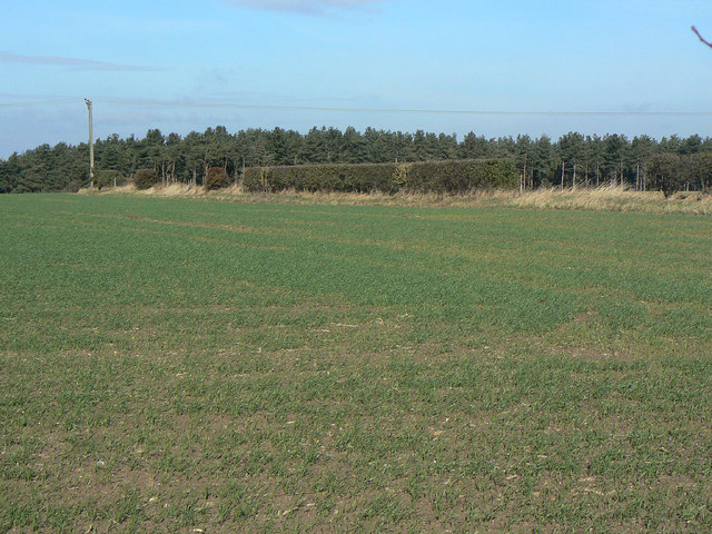 View towards Cotgrave Forest