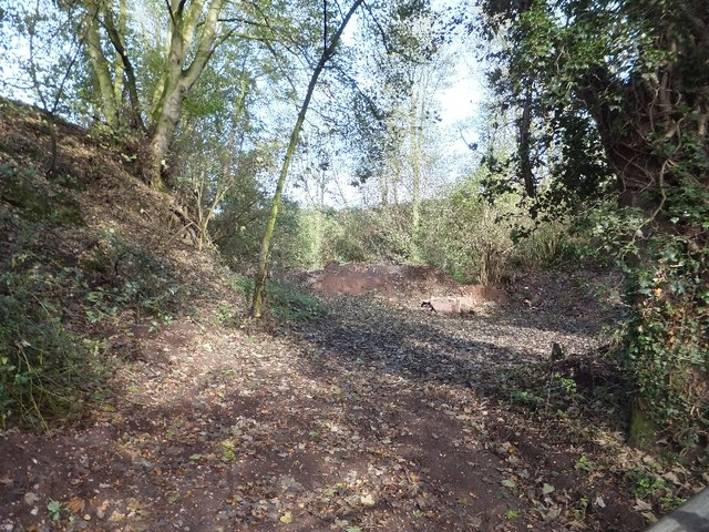Former quarry in Willington Woods