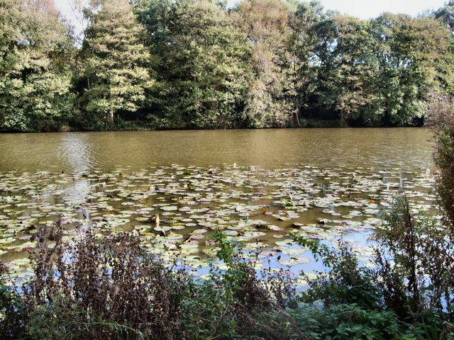 Water Lilies - Herstmonceux Castle moat