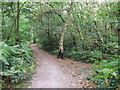 TQ3764 : Path in Threehalfpenny Wood by David Anstiss