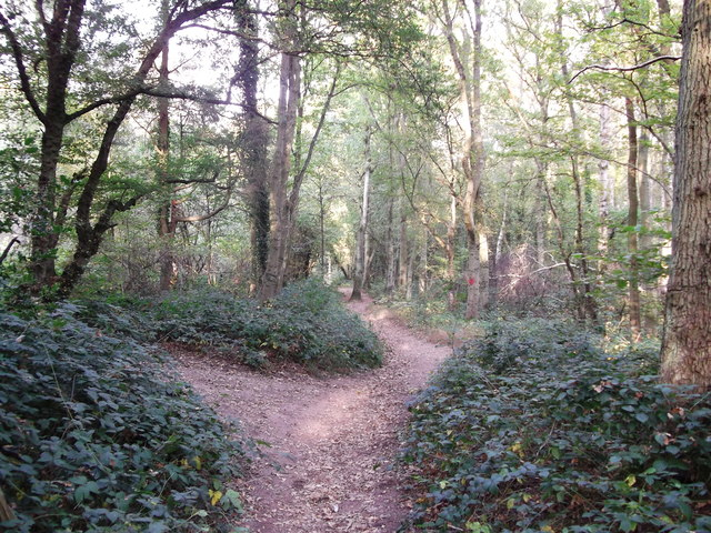 Bridleway junction in Frith Wood