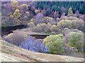 NN8100 : Waltersmuir Reservoir : Week 43