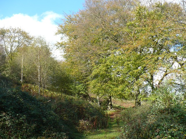Trees beside the A4048 near Markham