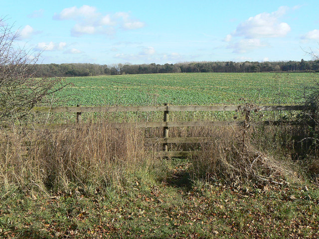 Field on Cotgrave Wolds