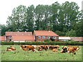 SK6480 : Dairy cows grazing near Mill Farm by Christine Johnstone