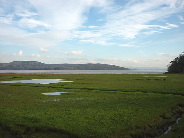 Salt marsh, Kent estuary near Holme Island