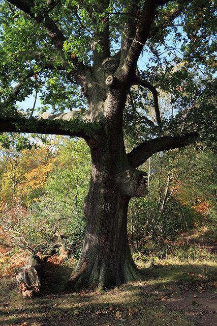 The Centre Tree