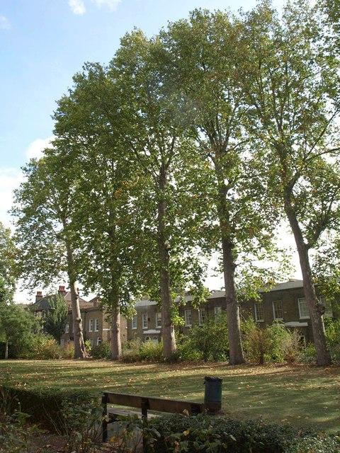 Churchyard trees, Walworth