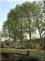 TQ3278 : Churchyard trees, Walworth by Derek Harper