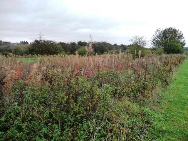 Autumnal colours along the towpath boundary