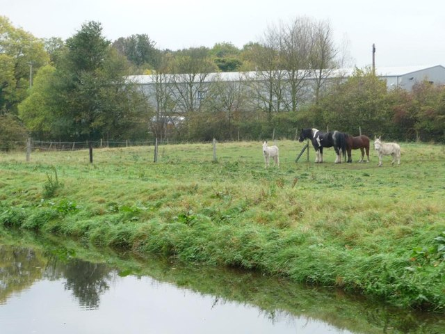Horses and donkeys grazing alongside the canal