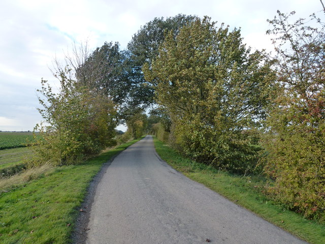 Trees on Rookery Road