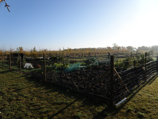 A fine day over the allotment gardens