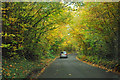TQ4463 : Autumnal tunnel by Robin Webster