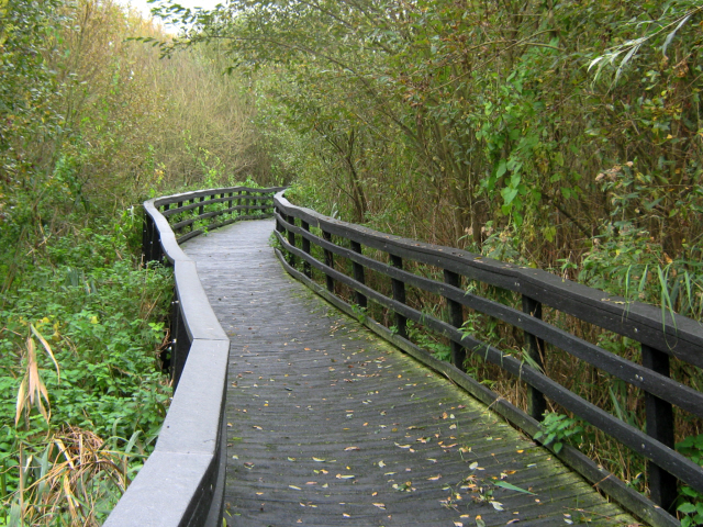 Walkway through the marshes, Ashcott Corner