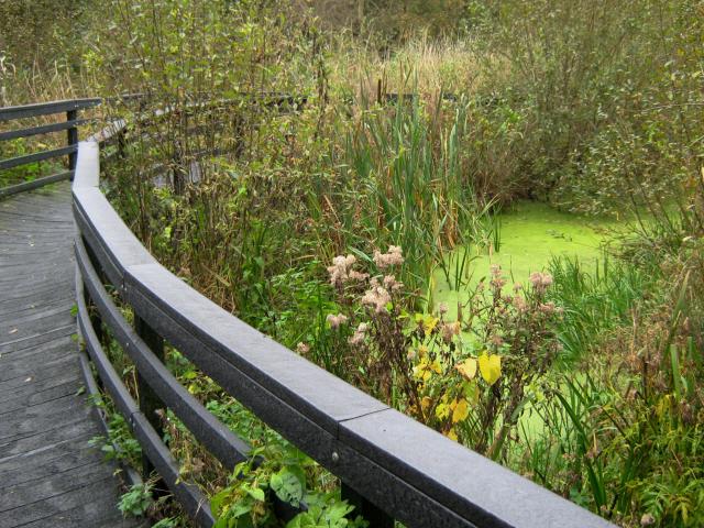 Walkway through the marshes, Ashcott Corner