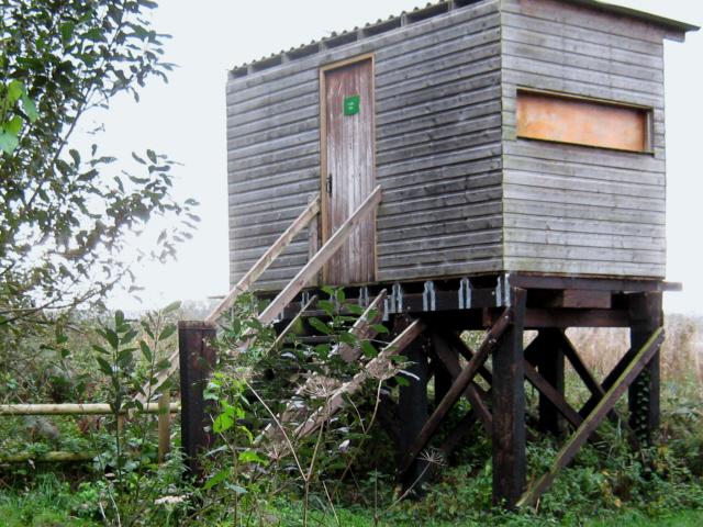 Noah's Hide, Shapwick Heath