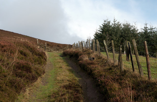 Farm and estate road to Corrennie Moor