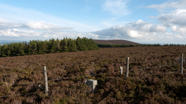 Moorland of Red Hill with fence, boundary stone and woodland