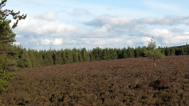 Heather moorland surrounded by trees