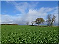 NZ1408 : Farmland, Ravensworth by Andrew Smith