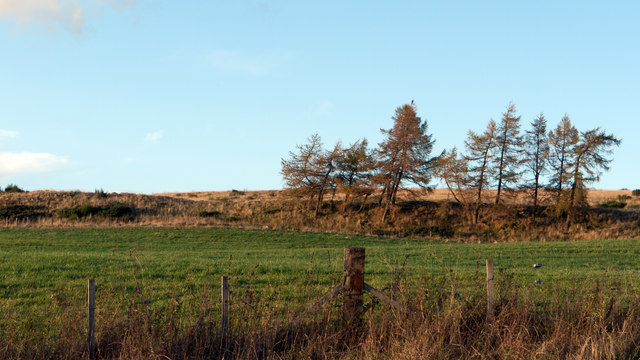 Field on north side of B9119 near Clashholm