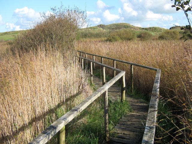 Walkway across reed beds, Burnham Dunes