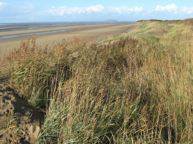 Berrow Sands and dunes