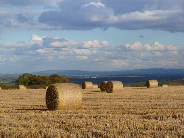 Farmland, Middleton Tyas