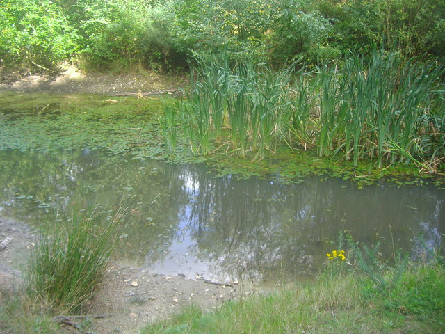 The A3 pond on Esher Common