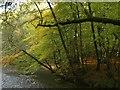 SX5259 : Plym in Bickleigh Vale by Derek Harper