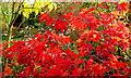 SO6424 : Autumn garden 3 : Week 44