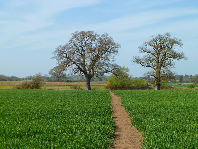 Farmland, Shellingford