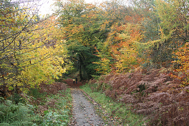 North Bovey: North Bovey Woods