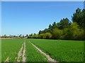 SU4789 : Farmland, Milton by Andrew Smith