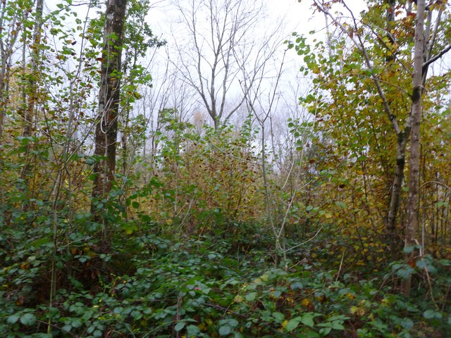 Gare Hill, woodland