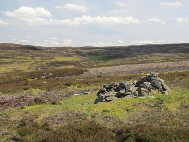 Line of grouse butts above College Edge
