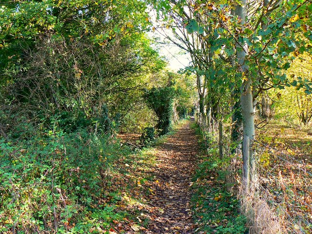 East along the Thames Path west of Ashton Keynes
