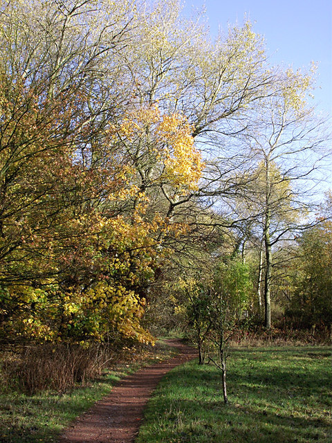 Pathway in Baggeridge Country Park near Sedgley