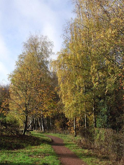 Pathway in Baggeridge Country Park near Sedgley